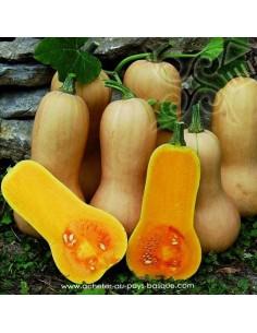 Courge - légumes frais vente en ligne - livraison courses domicile Bayonne Anglet BAB