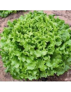 Batavia - légumes  - livraison courses domicile